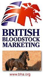 Bloodstock Marketing
