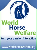 World Horse Welfare