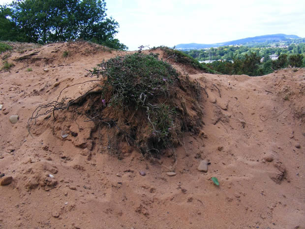 The pictures show how some of our money is being spent at Hartlebury Common.