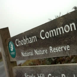 Report by the CHOBHAM COMMON DEFENCE GROUP