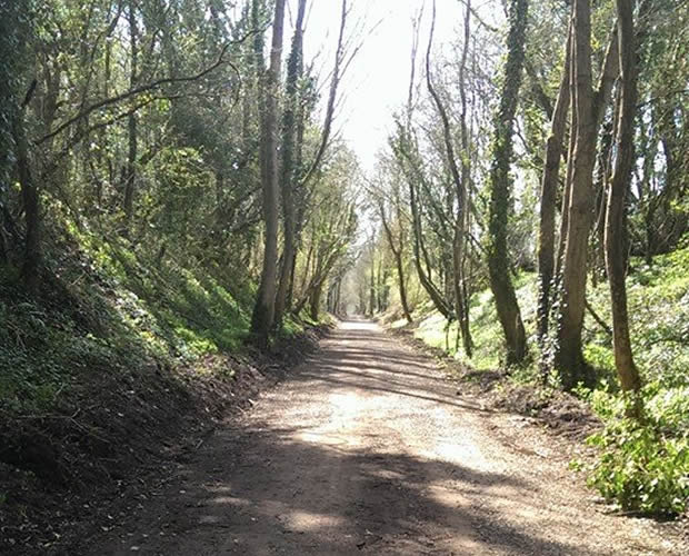 Meon Valley Trail