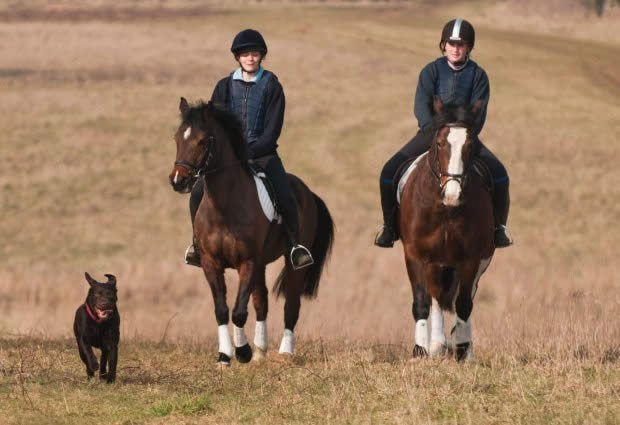 Horse and dog incidents soar by a third