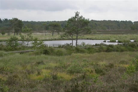 The Thursley Group of commons.