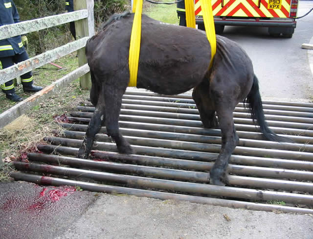 Have you had an accident involving a cattle grid?