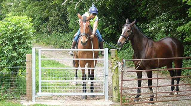 Kate riding Gus (18 hh ISH) and leading Louis (16.3 TB) and the new gate.